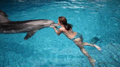 Dolphins in Serik
