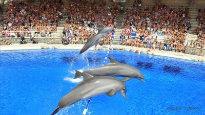 Dolphin show in Antalya from Serik