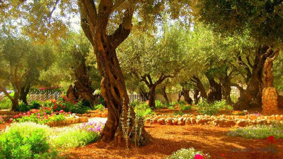 A tour of the holy places of Israel from Serik
